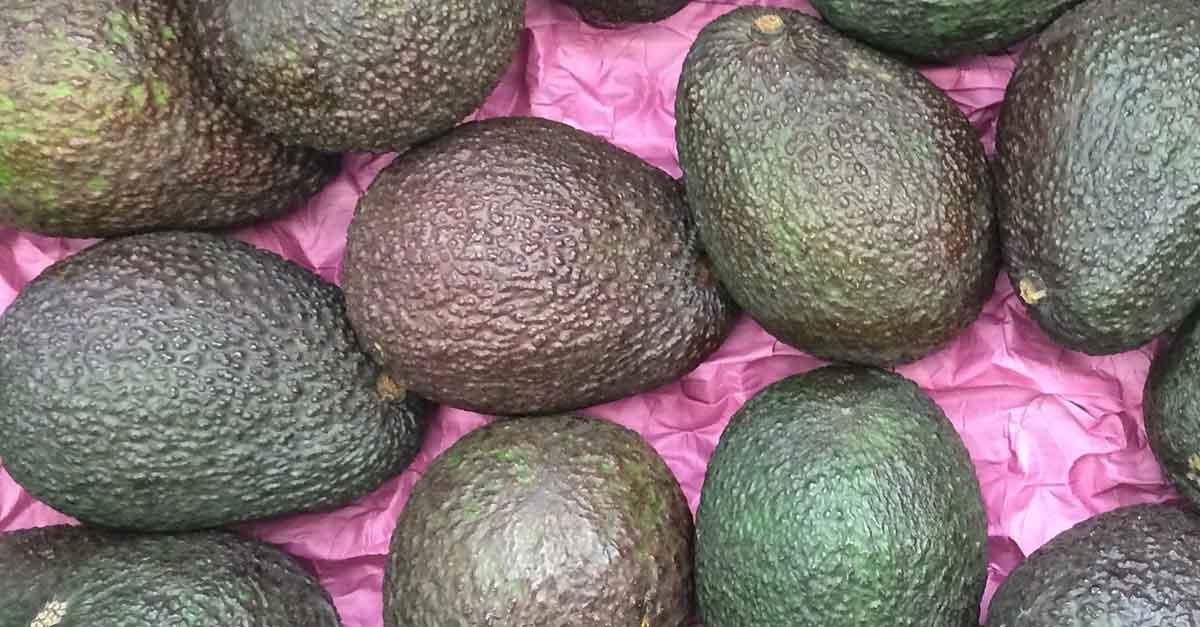 Avocados zählen zu den basischen Lebensmitteln