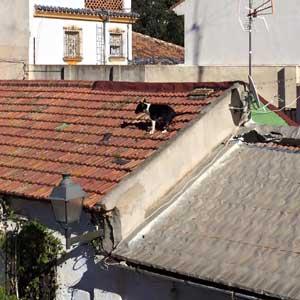 Hund auf Dach.