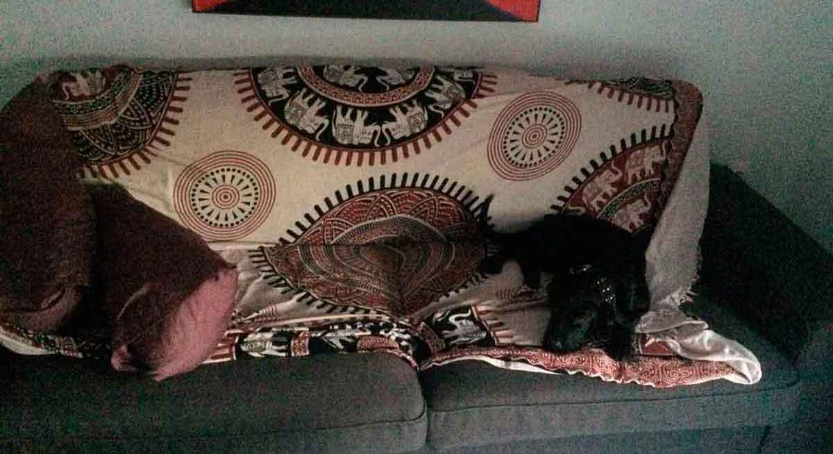 Hund auf Sofa.