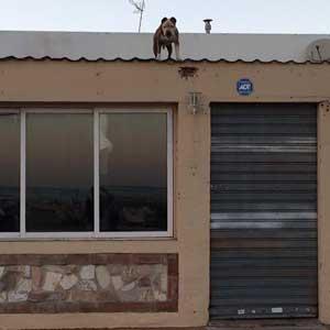 Hund auf Dach