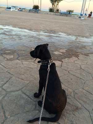 Thor auf der Strandpromenade.